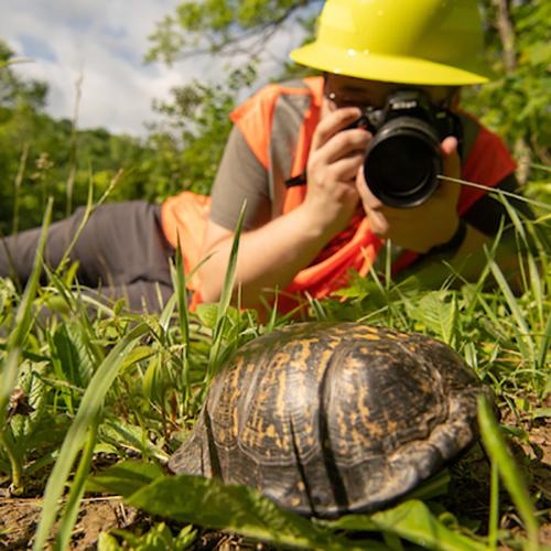 Student takes a close-up photo of a turtle in a field for their work as a photojournalism specialist.