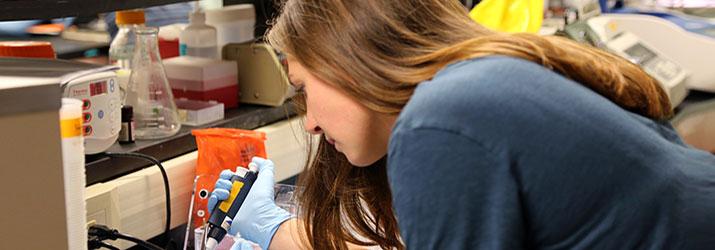 Hayley Herock does undergraduate research in the lab.