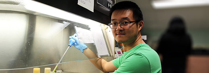 Xiao Lui conducts molecular and cellular biology research with Dr. Allan Showalter.