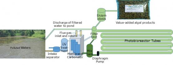 Illustration of Algal Wastewater Processing with integrated Membrane Carbonator