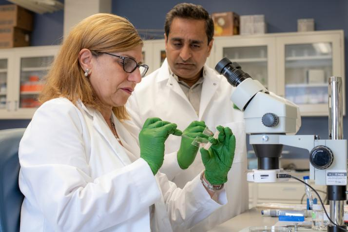 College researchers probe racial disparity in fatty liver disease