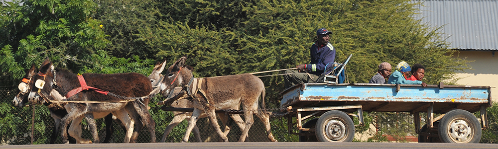 Global Health people in wagon with donkeys