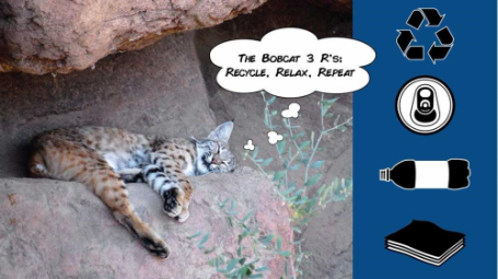 The Bobcat 3 R's:Recycle, Relax, Repeat.