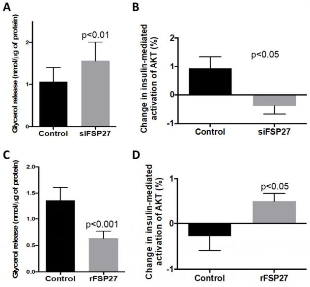 Graphical display of results showing recombinant FSP27 improves insulin signaling in human visceral adipose