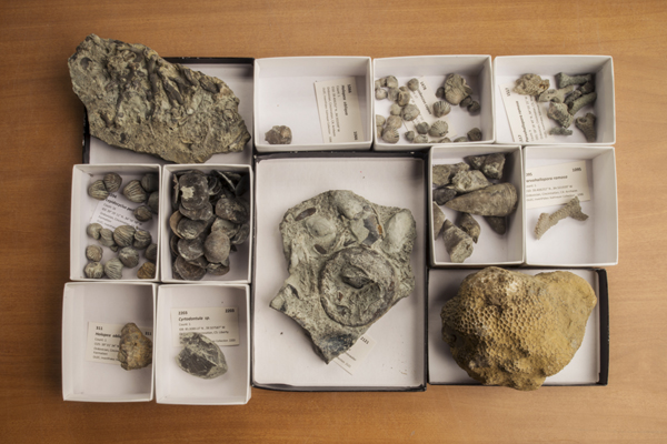 Fossil samples