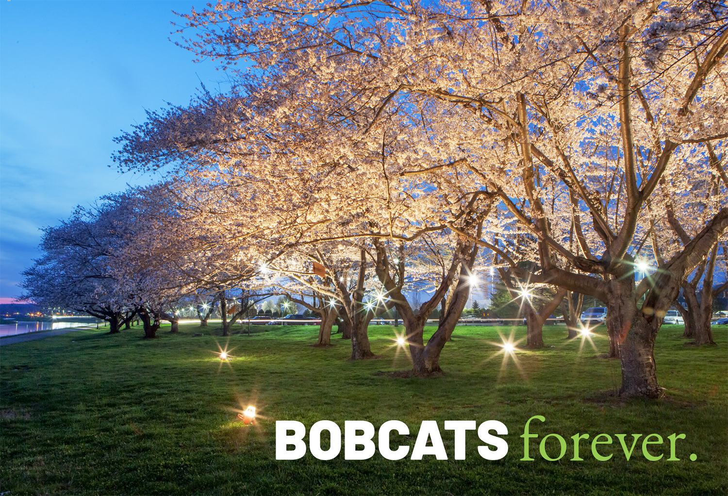 "Senior Postcard of cherry blossom trees with text overlay ""Bobcats forever"""