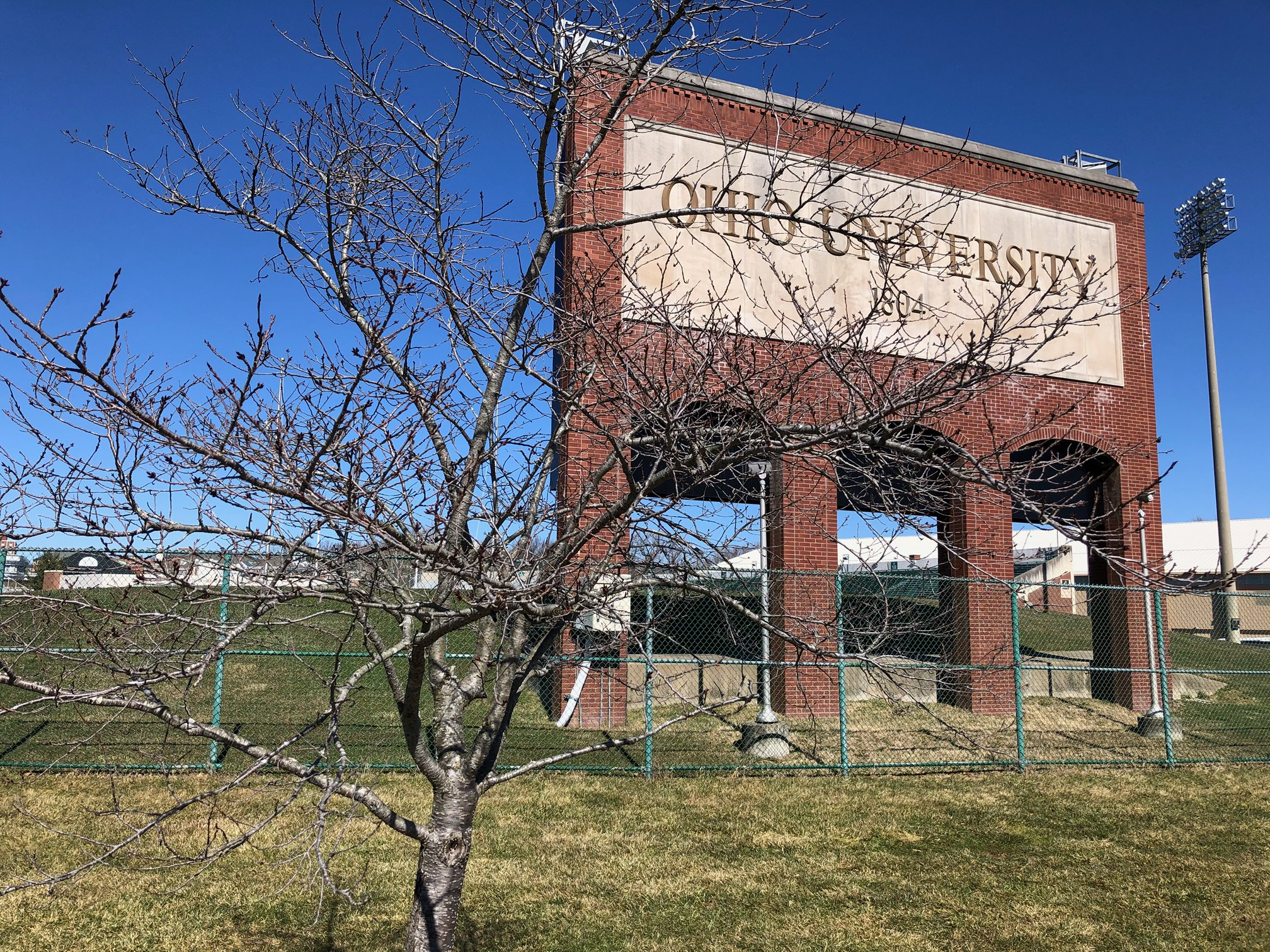 Bare cherry trees on March 2nd near Penden Stadium.