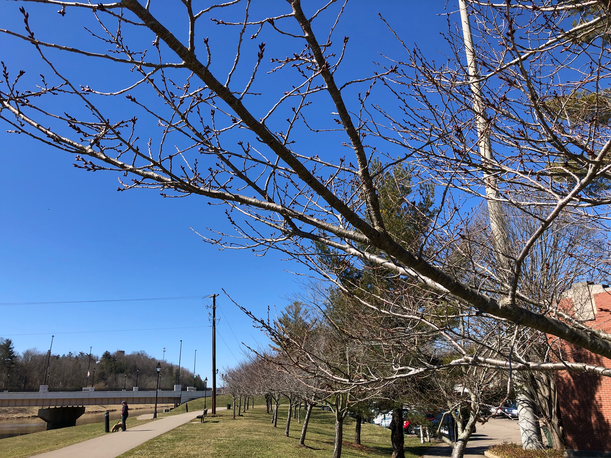 Bare cherry trees on March 2nd along Hocking river