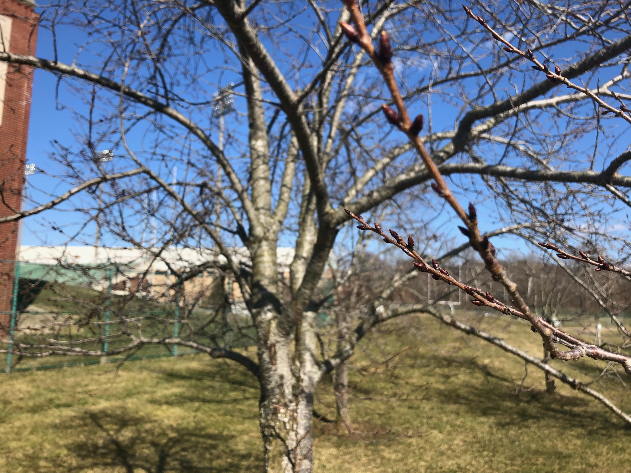 2021_cherrytrees_0305_1