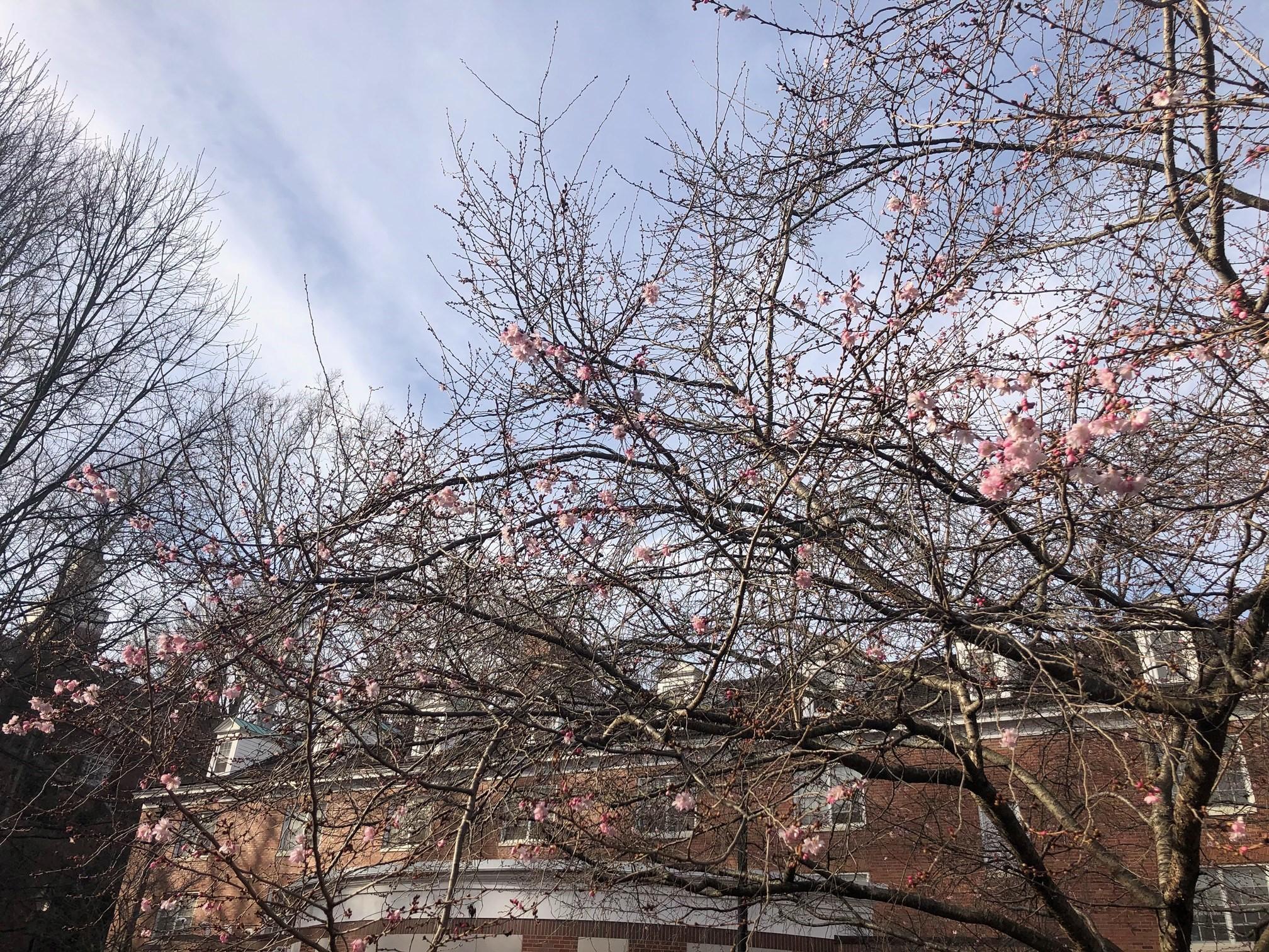2021_cherrytrees_0313_5