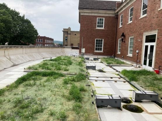 Schoonover Green Roof initial planting July 2020