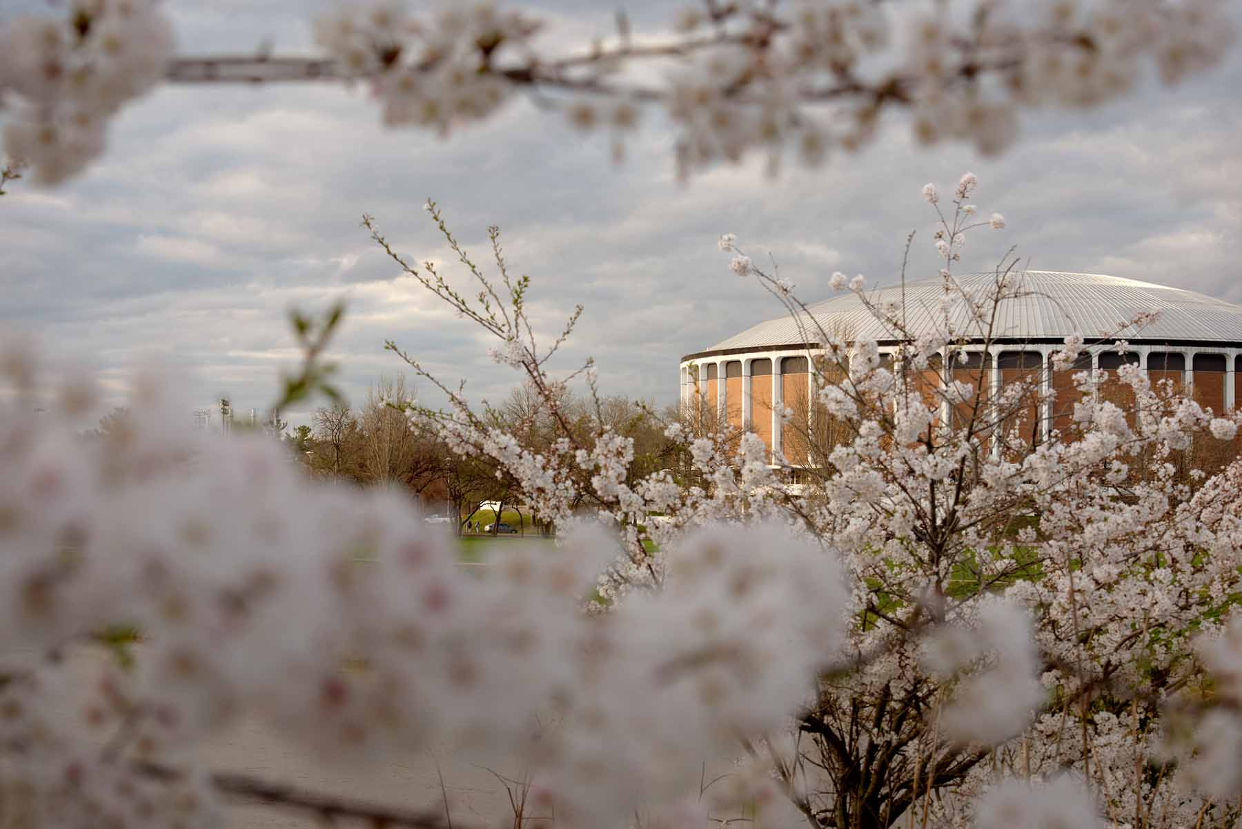 The Convocation Center at Ohio University as viewed through flowering cherry blossoms