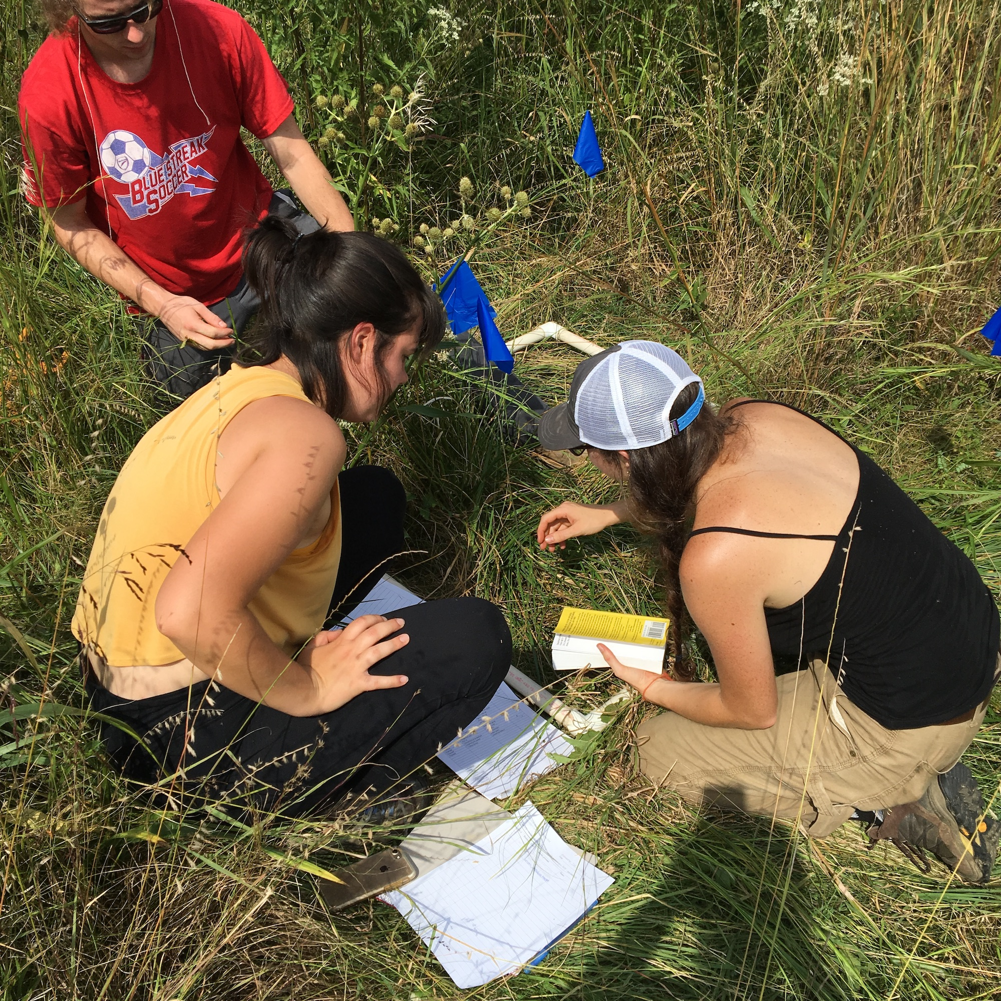 Students working in tall grass on Radar Hill