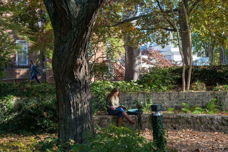 Student studying outdoors in nature